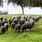 ANICE impulsa un Plan de Promoción Exterior para los productos del cerdo ibérico